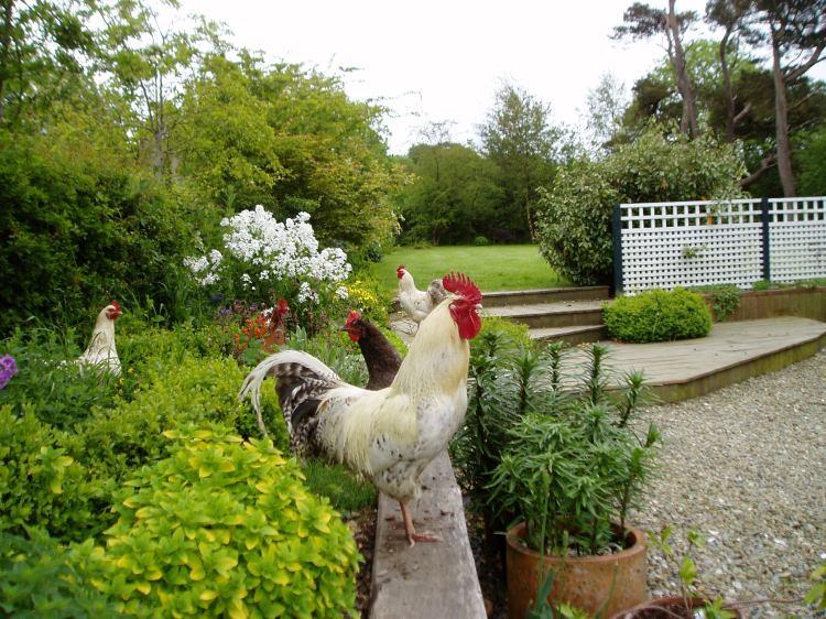 Country garden Cardigan