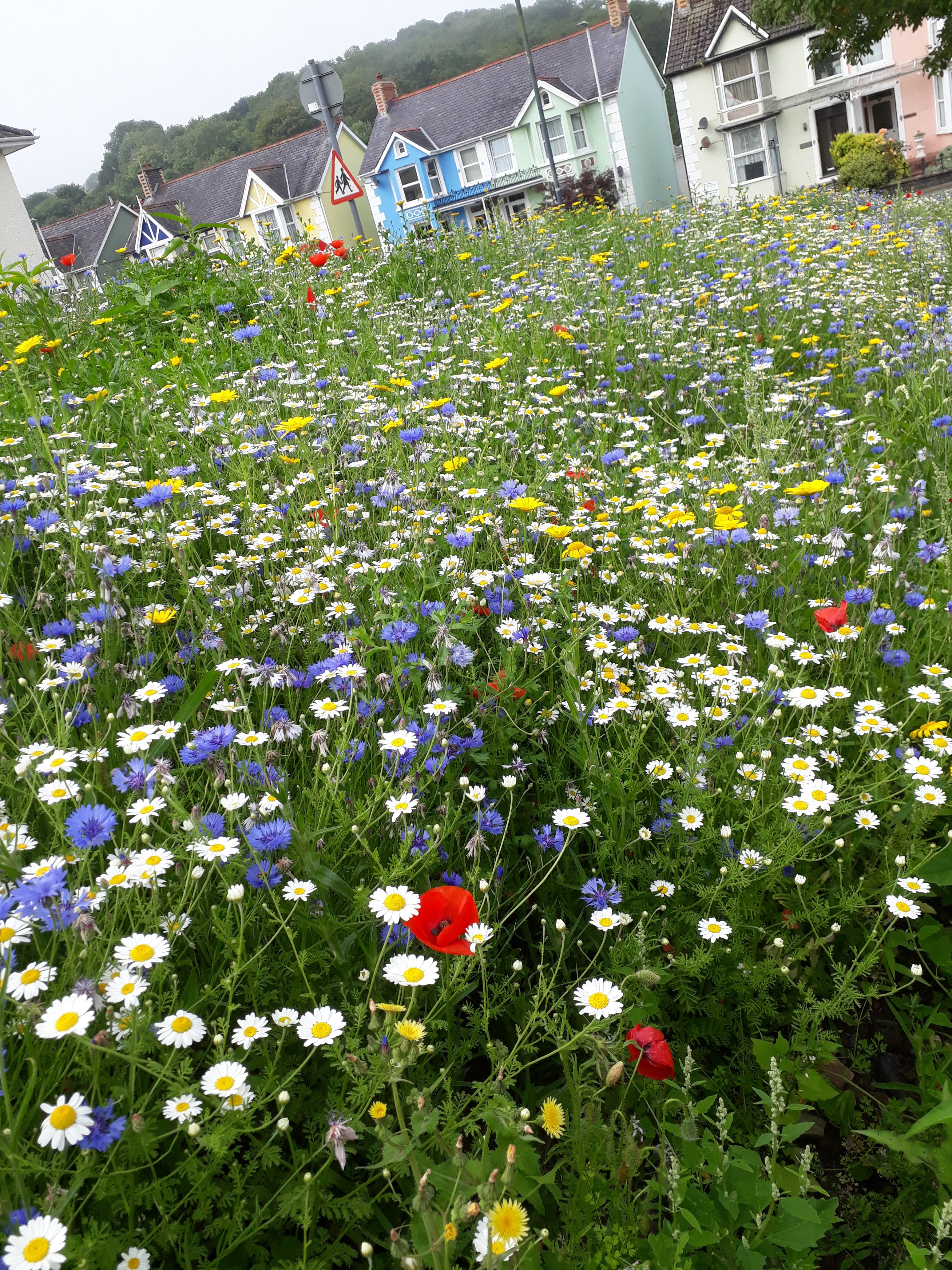landworks-wildflowers-aberaeron-ceredigion