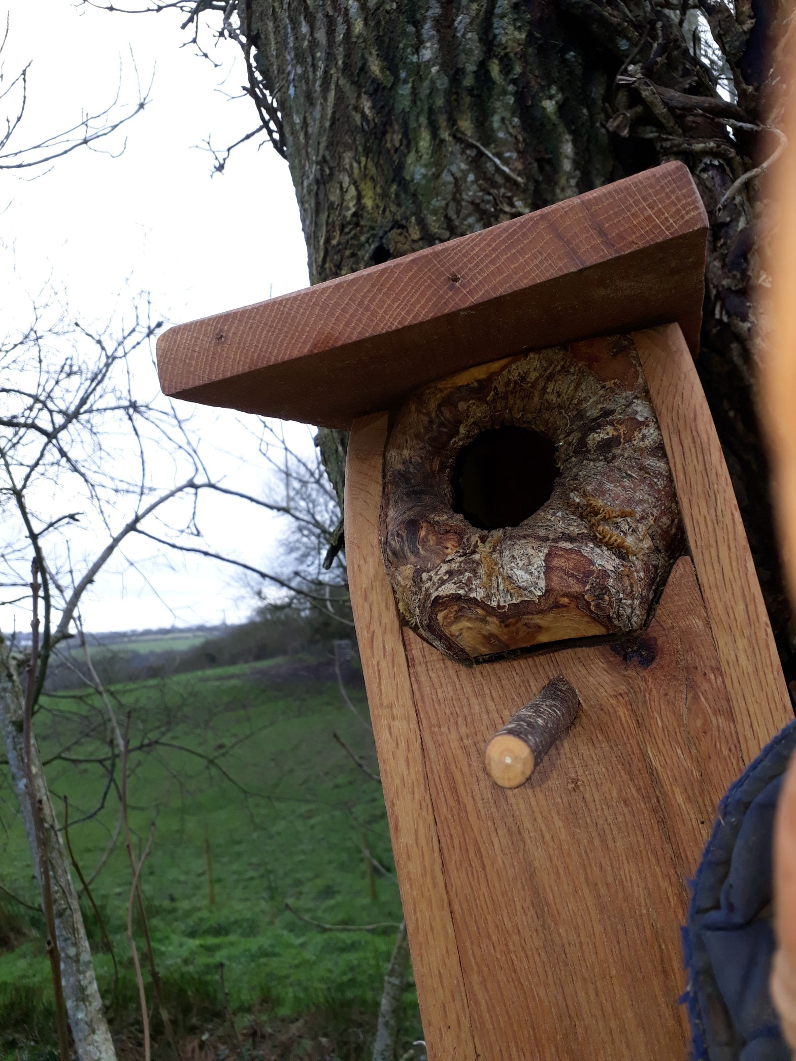 landworks-natural-treehole-bird-box-carmarthen