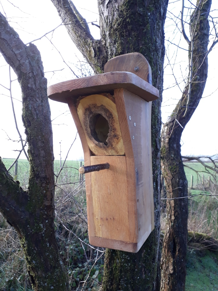 landworks-natural-treehole-birdbox-carmarthenshire