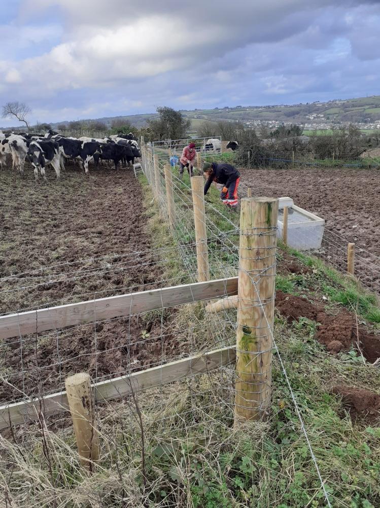 landworks-hedgerow-plantingresaith