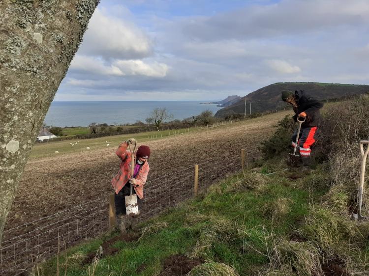 landworks-tree-planting-tresaith-ceredigion
