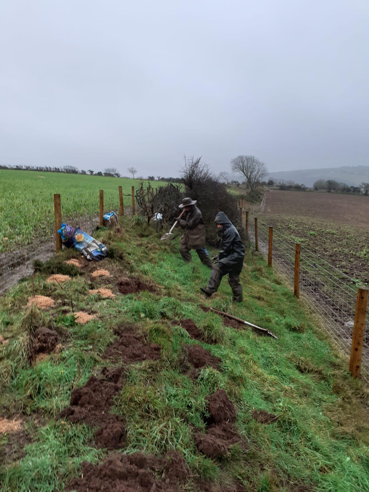 landworks-rainy-tree -planting-tresaith