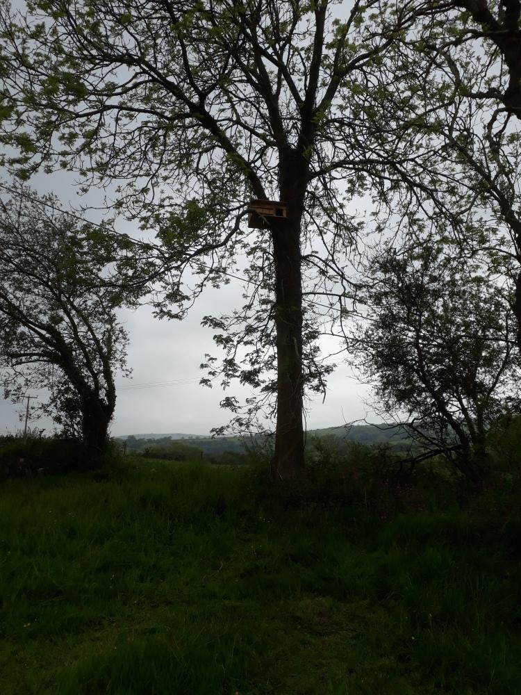 landworks-barn-owl-box-aberporth